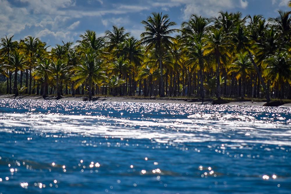Fotografía de la playa, con palmeras desde el mar
