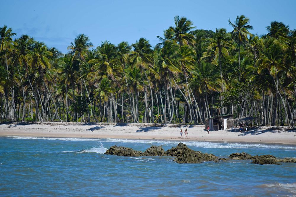 Fotografía de la playa, arena blanca y palmeras