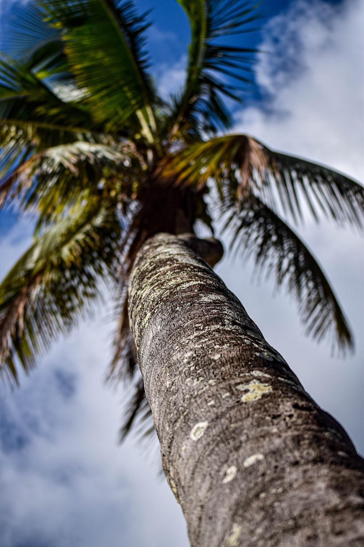 Fotografía de una palmera
