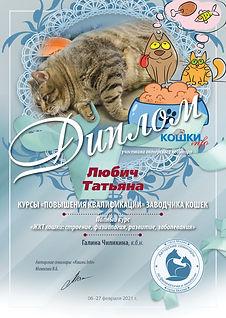 Вебинар 02 06 27 79 кошки 35 Любич Татья