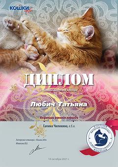 Вебинар 10 14 21 105 кошки 5 Любич Татьяна.jpg