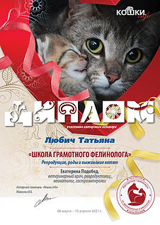 Вебинар 03 04 06 10 21 80 кошки 53 Любич