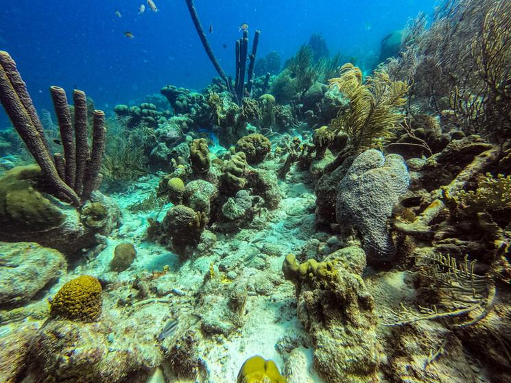 Bonaire-2019-Derrick-Edwards-0440.jpg