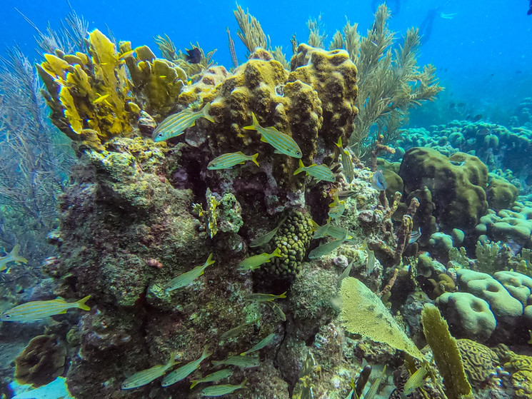 Bonaire-2019-Derrick-Edwards-0366.jpg