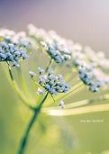 •Misty_Meadow_FRONT.jpg
