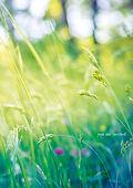 •Green_Meadow_FRONT.jpg