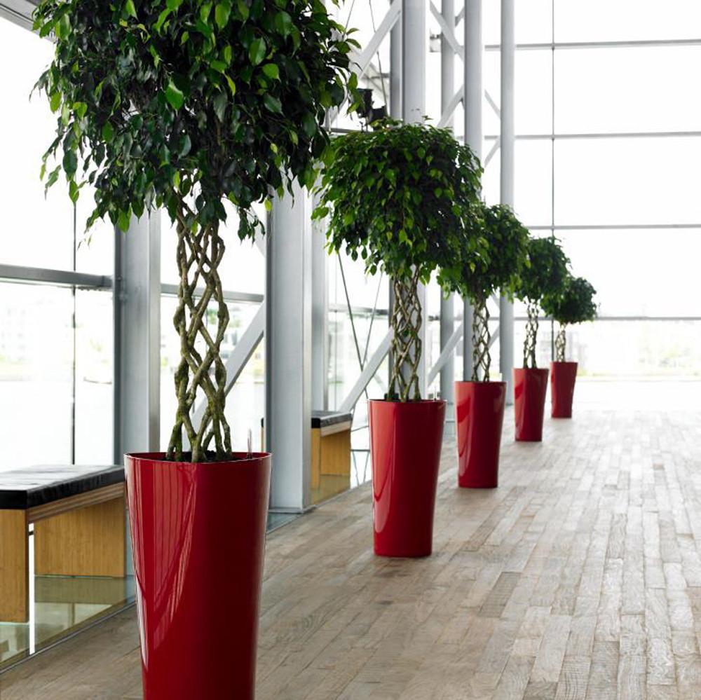 Ficus_benj_Exotica__0000_012590 (1).jpg