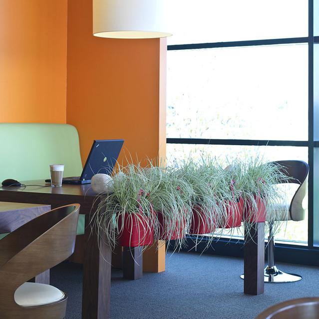 Carex_groen__0000_016699 (1).jpg