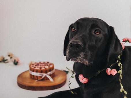 Doggy cake smash - Beautiful lola