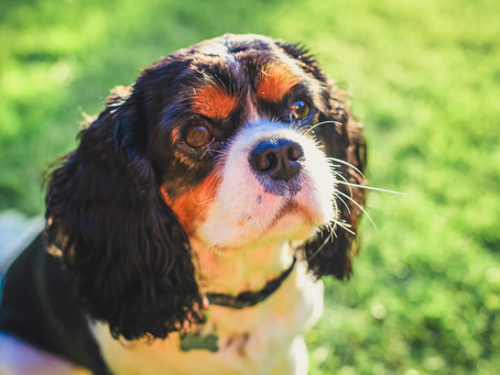 Rolo - dog Photoshoot 🐾