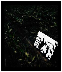 Ombra de milloc - 2006