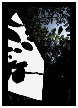 Ombra maculada - 2006