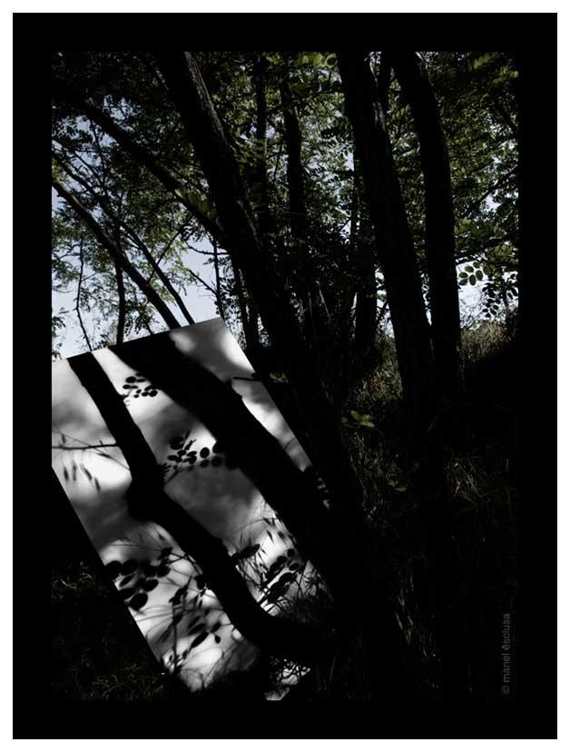 Ombra de bosc II - 2006