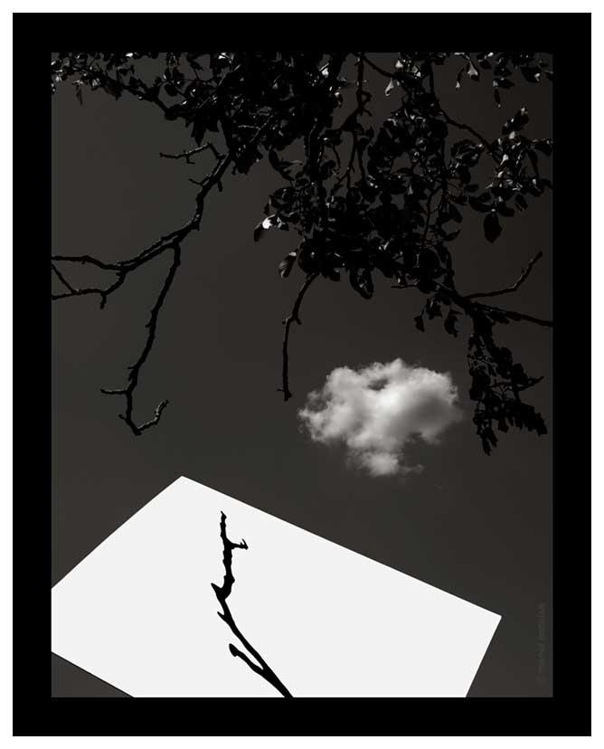 Ombra de branc amb nuu - 2006