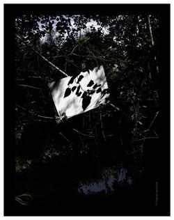 Ombra amb reflex d´ombres - 2006