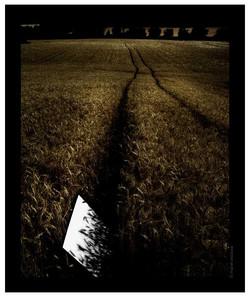 Ombres de blat - 2006