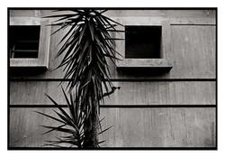 Retrat-1978