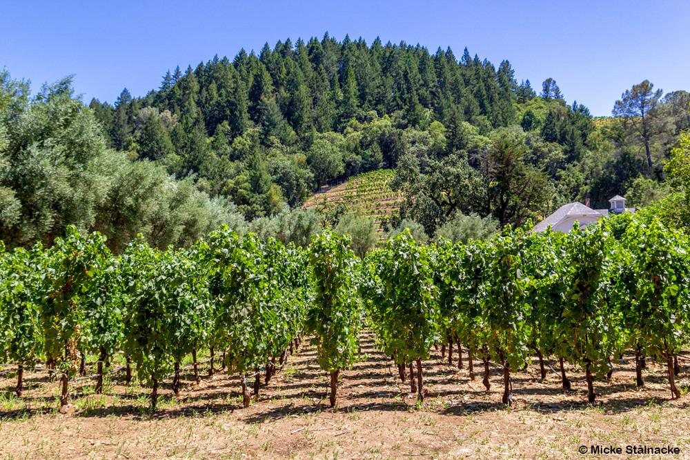 Spring Mountain Vineyard.