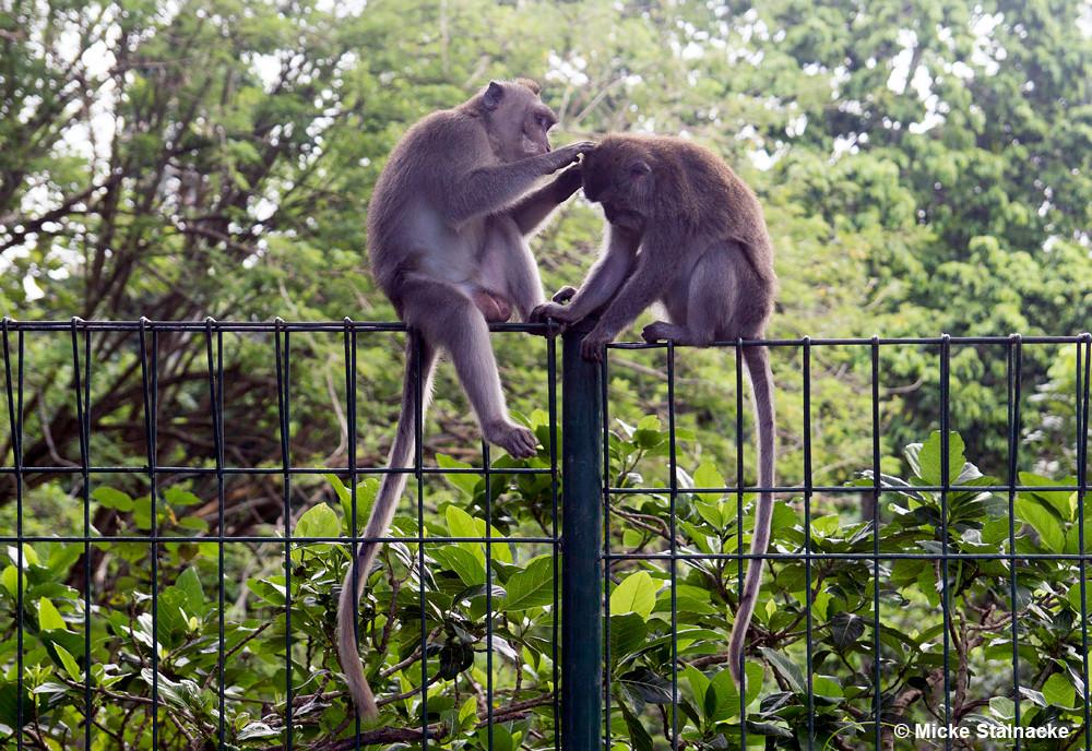 Sacred Monkey Forest, Bali, Indonesien.