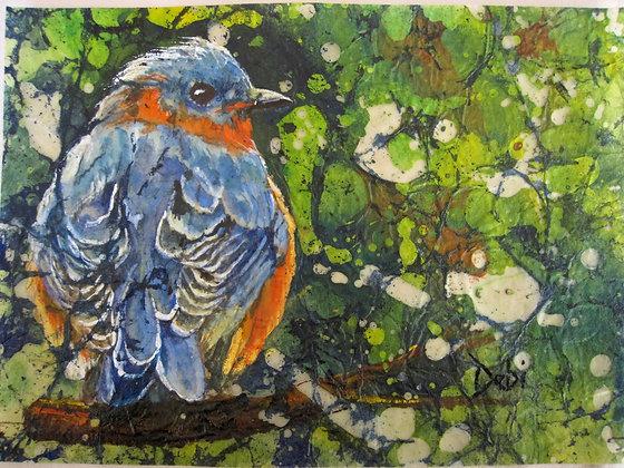 Orange Breasted Blue Bird