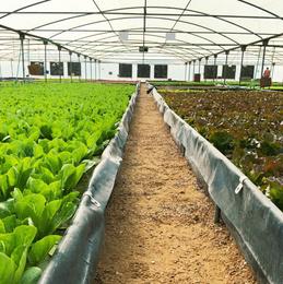 Commercial Large Scale Hydroponic Aquaponic Farm