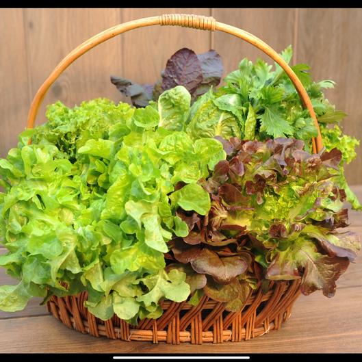 Aquaponic Leafy Greens