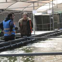 Mixed Cell Raceway System implemented at agrimatic farms