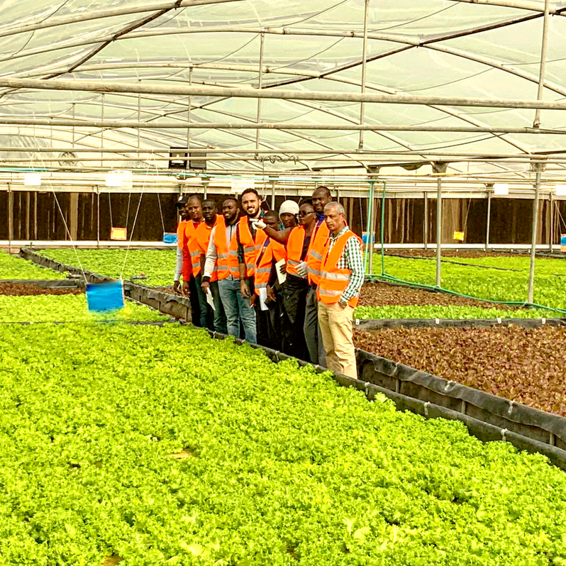 Cooperation across Africa in the field of Soilless Agriculture