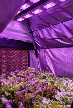 Artificial Grow Light Units