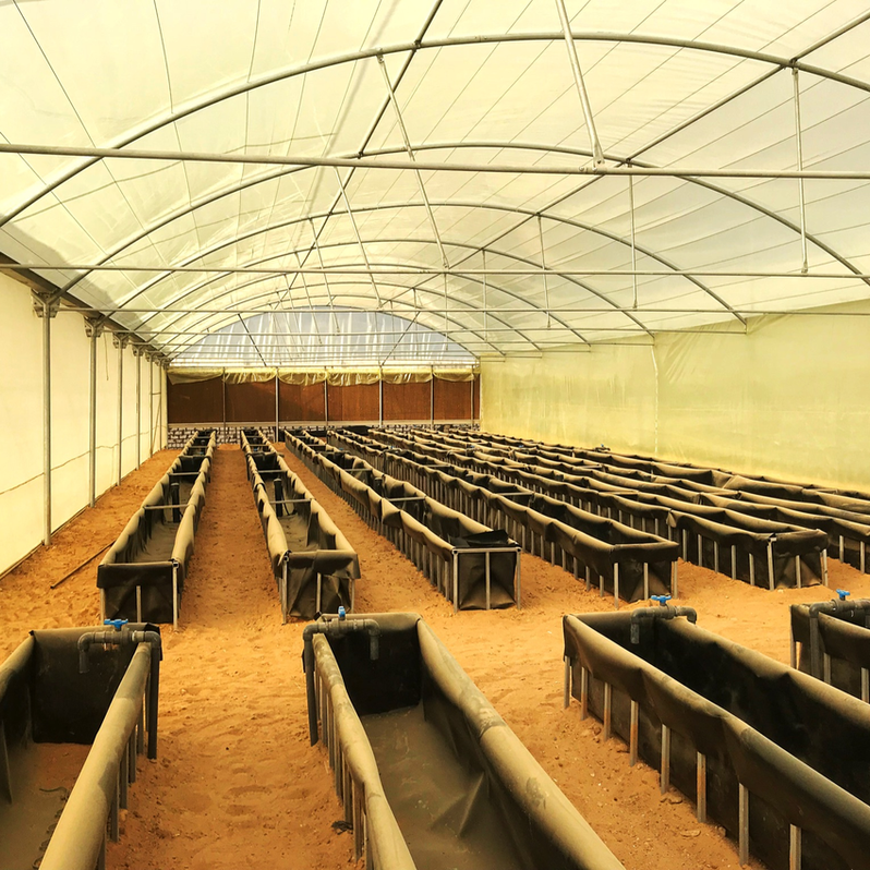 Construction of a Hydroponic Tomato Production Facility by Plug'n'Grow