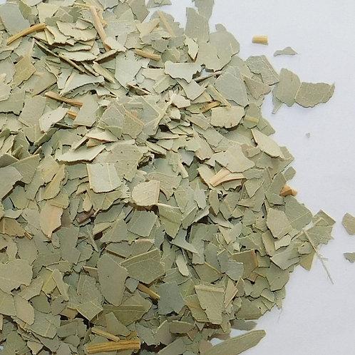 Eucalyptus CO cut