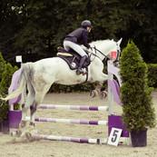 show-jumping-594156_1920.jpg