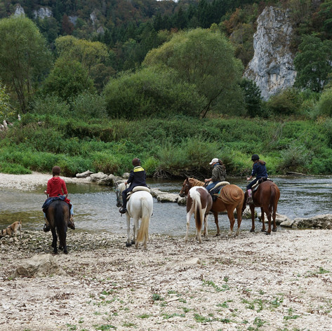 horses-1678616_1920.jpg