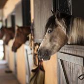 horse-2649609.jpg