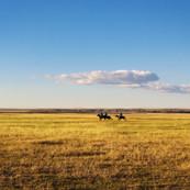 horseback-riding-678678.jpg
