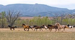 Nuestros curso con caballos