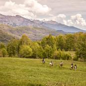 animals-chiusella-valley-horses-1692.jpg