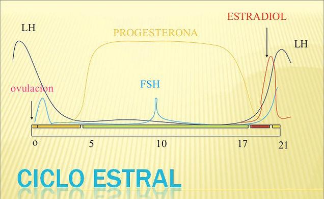 induccin-ciclo-estral-1-638456.jpg