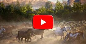 landscape-nature-horse-morning-wildlife-
