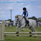 asesoramiento caballo.jpg