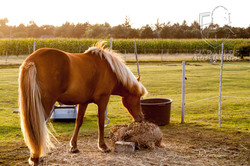 horse-2168443
