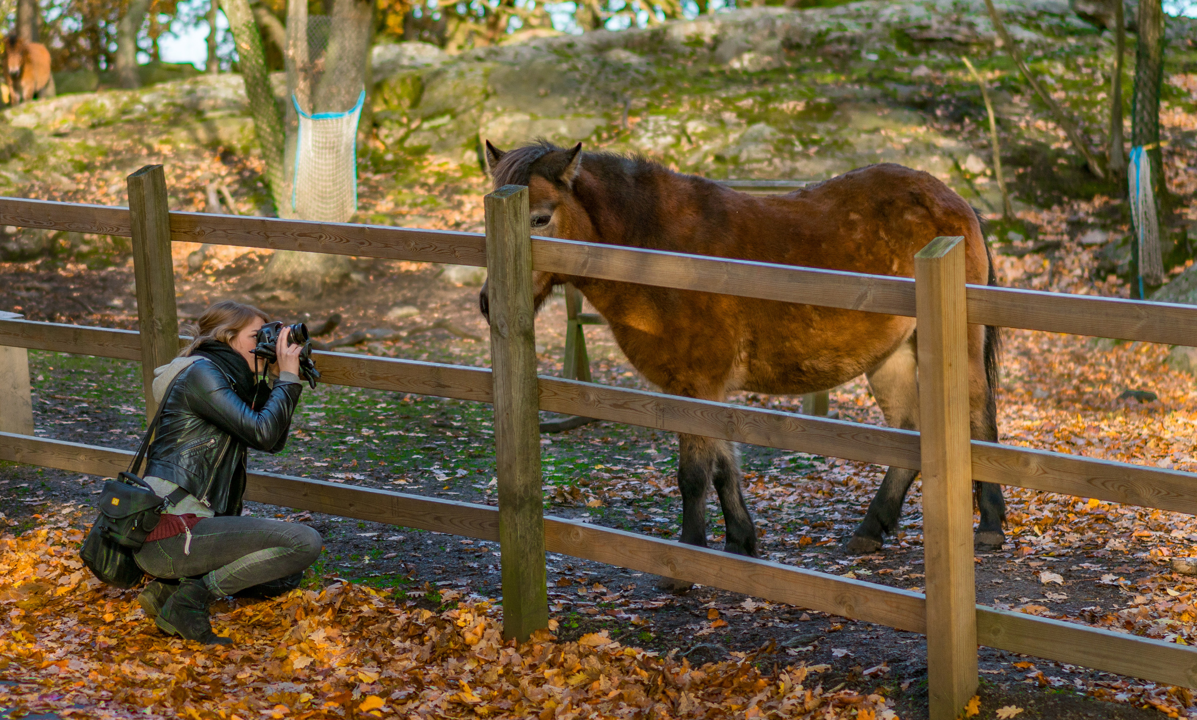face-landscape-fall-people-animals-portr