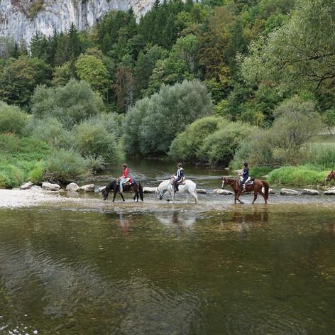 horses-1678665_1920.jpg