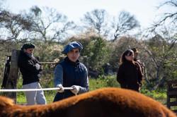 amanse caballos