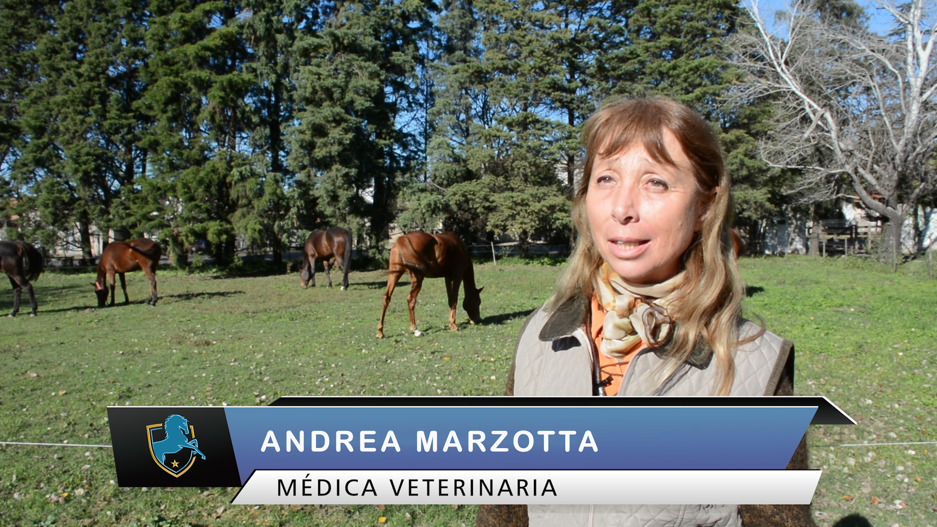 caballos tv