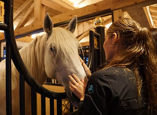 horse-2902867BB.jpg