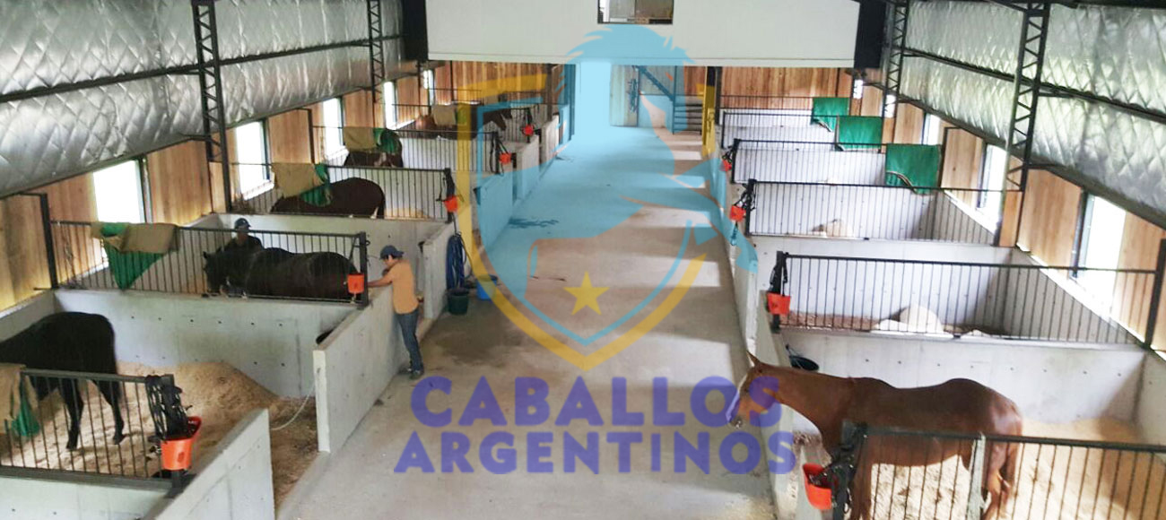 caballos argentinos