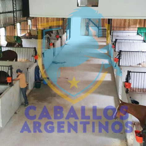 caballos argentinos.jpg
