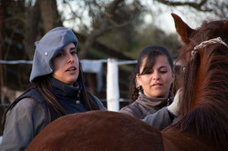 grupo caballos argentinos