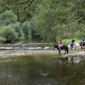 horses-1678630_1920.jpg